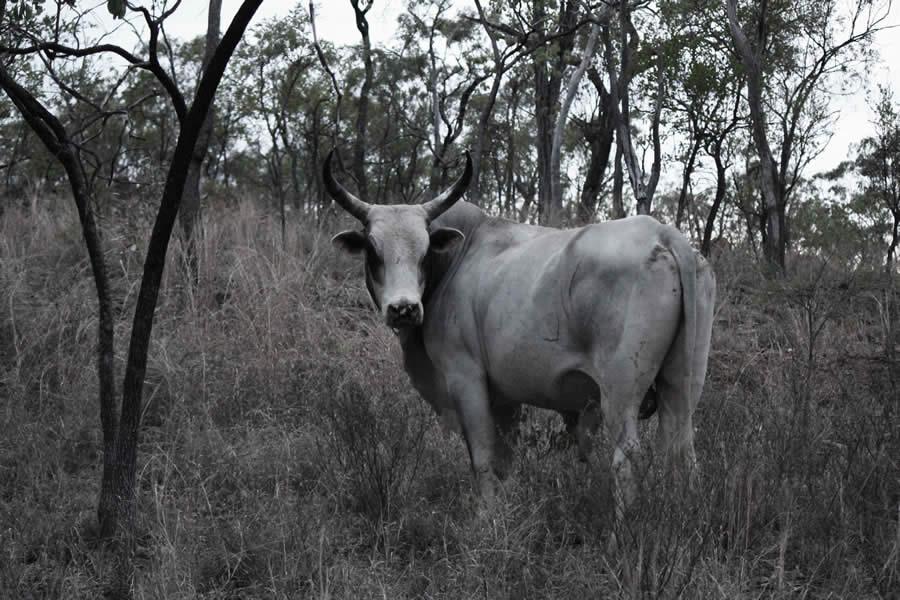 Cape York Wildlife