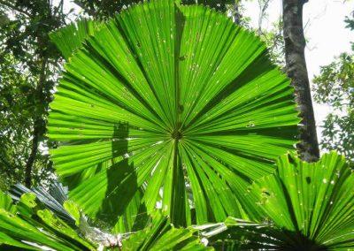 daintree-rainforest